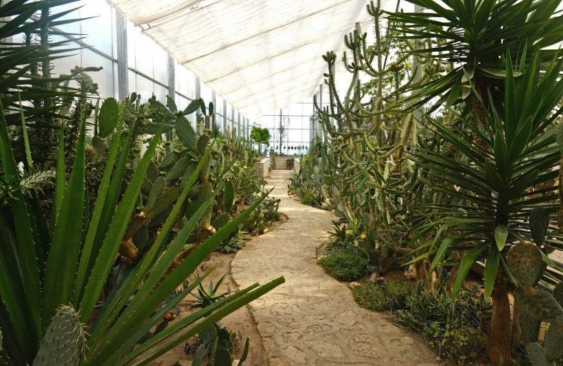 Collection of giant cacti